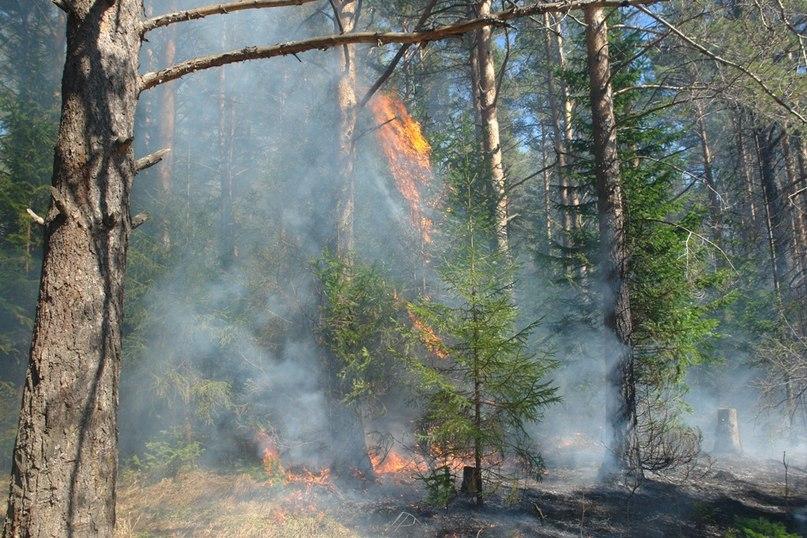 В Челябинской области, где ситуация с природными пожарами чрезвычайно серьезная, едва не пострада