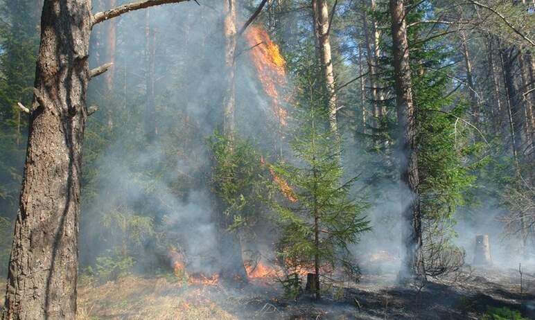 Крупный лесной пожар в Пластовском районе (Челябинская область) локализован на площади 813 гектар