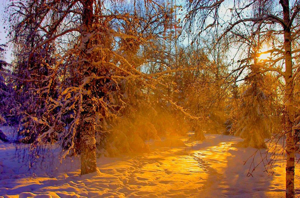 Ночь на субботу, 22 декабря, будет самой длинной в этом году. Зимнее солнцестояние наступит в 1 ч