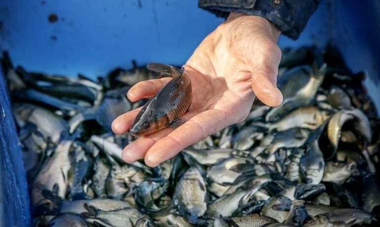 В Магнитогорске (Челябинская область) состоялся финальный этап зарыбления водохранилища, в аквато