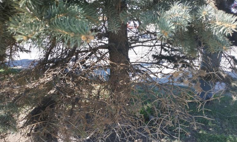 Челябинцев предупредили о предстоящих санитарной обрезке деревьев и удалении поросли.  К