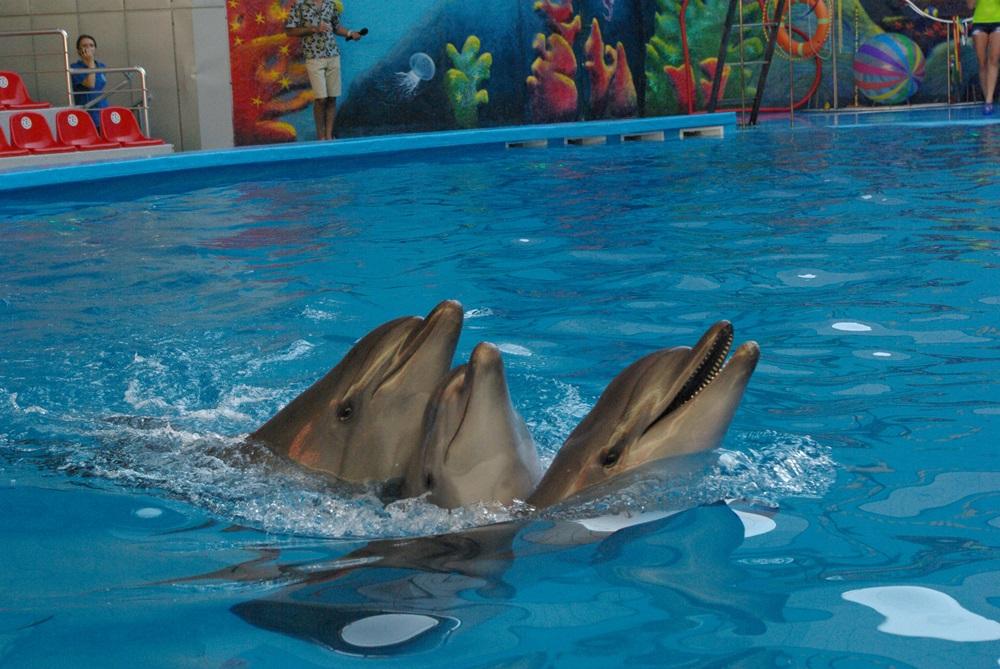 Челябинцы продолжают критиковать идею строительства в мегаполисе дельфинария. Сегодня, второго ок