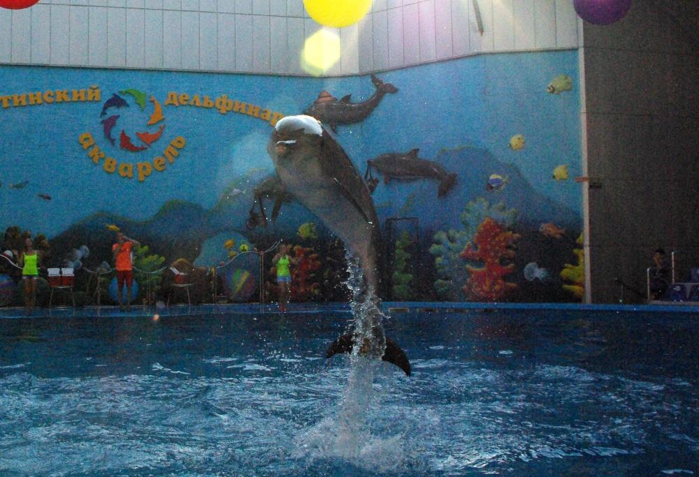 Челябинские власти сделали официальное заявление относительно судьбы дельфинария: его может не бы