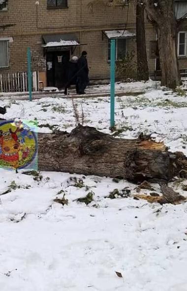 В Челябинске на восьмилетнюю девочку упало дерево. ЧП случилось 28 октября во дворе дома по улице