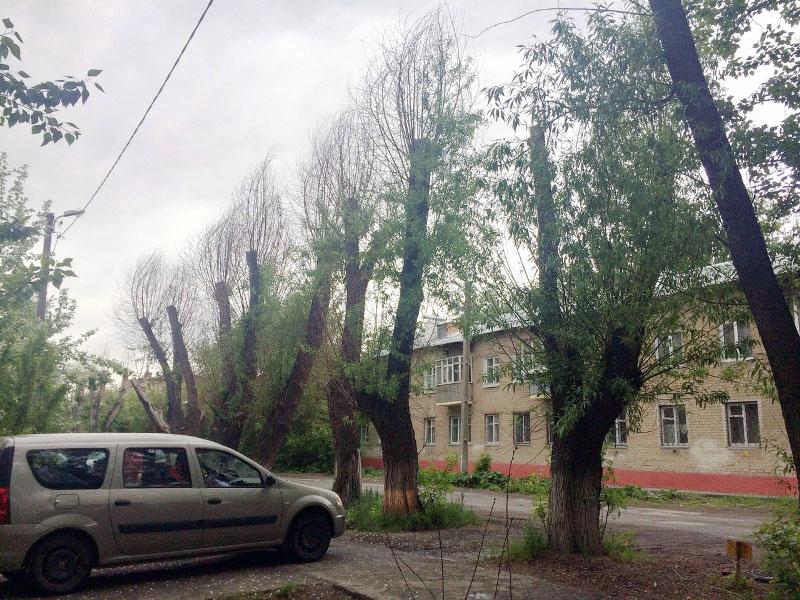 В Советском районе Челябинска погибли ивы на улицах Чехова и Громова. К гибели деревьев привела н