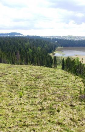 В девяти заказниках Челябинской области идут узаконенные рубки заповедного леса. Но это парадокс: