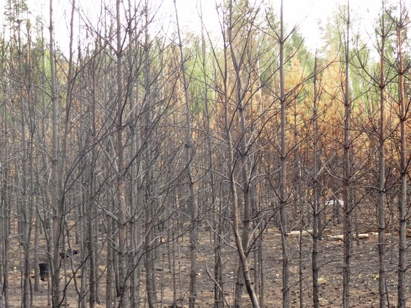 Пресс-служба областного управления лесами напоминает, что в случае обнаружения лесного пожара нео