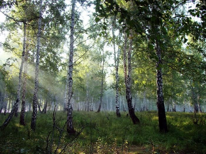 На Челябинскую область надвигается «Зеленая весна». Всероссийский экологический субботник пройдет