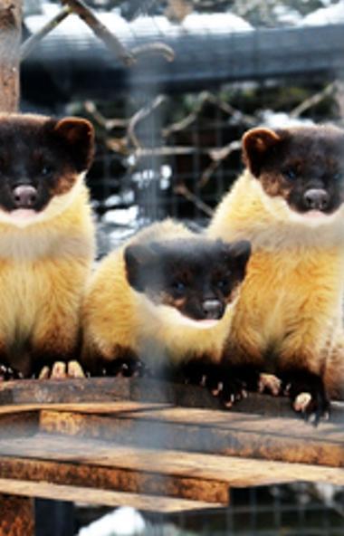 Сотрудники челябинского зоопарка боятся за жизнь и здоровье своих питомцев. В муниципальном звери