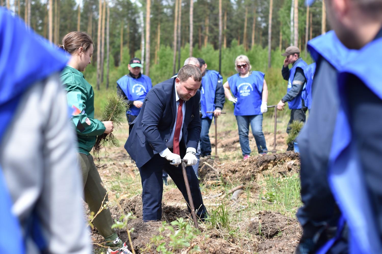 В Баландинском бору прошла заключительная высадка деревьев в рамках лесовосстановительного проект