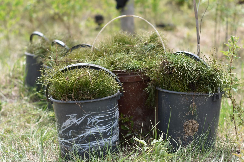 Более шести тысяч сеянцев сосны в рамках акции «АЭРОбика» посадили на месте пожара в Баландинском