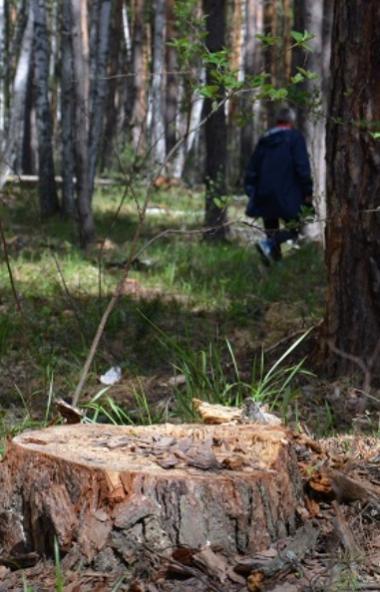 Травниковские бор в Чебаркульском районе Челябинской области в опасности. В этом представители оф