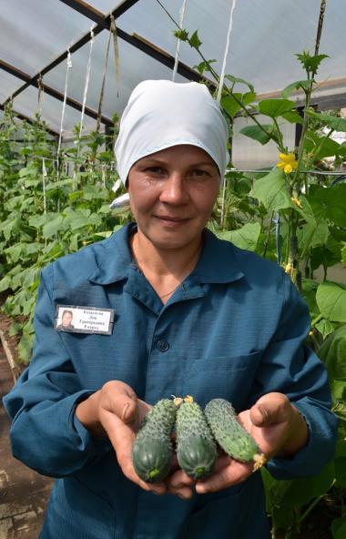 В ИК-4 ГУФСИН России по Челябинской области осужденные вырастили богатый урожай овощей. У них в э