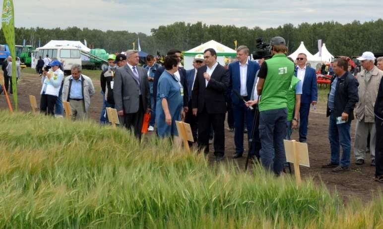 В Челябинской области прошел День поля – на двух площадках. Современные технологии выращива