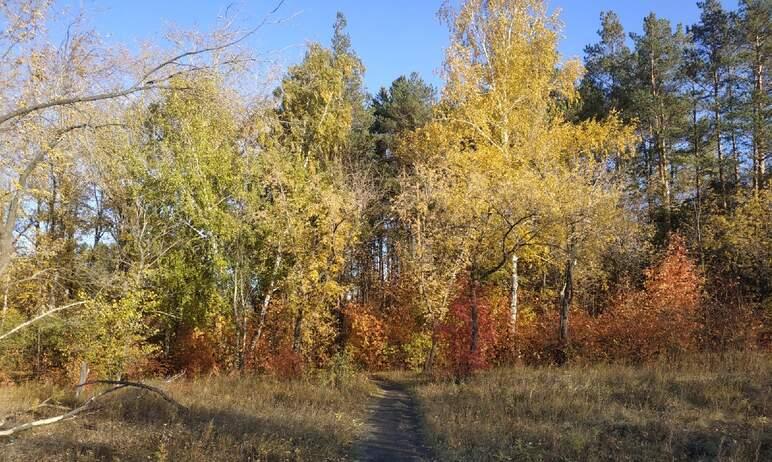 При долгожданной реконструкции парка Победы в Копейске (Челябинская область) деревья будут максим