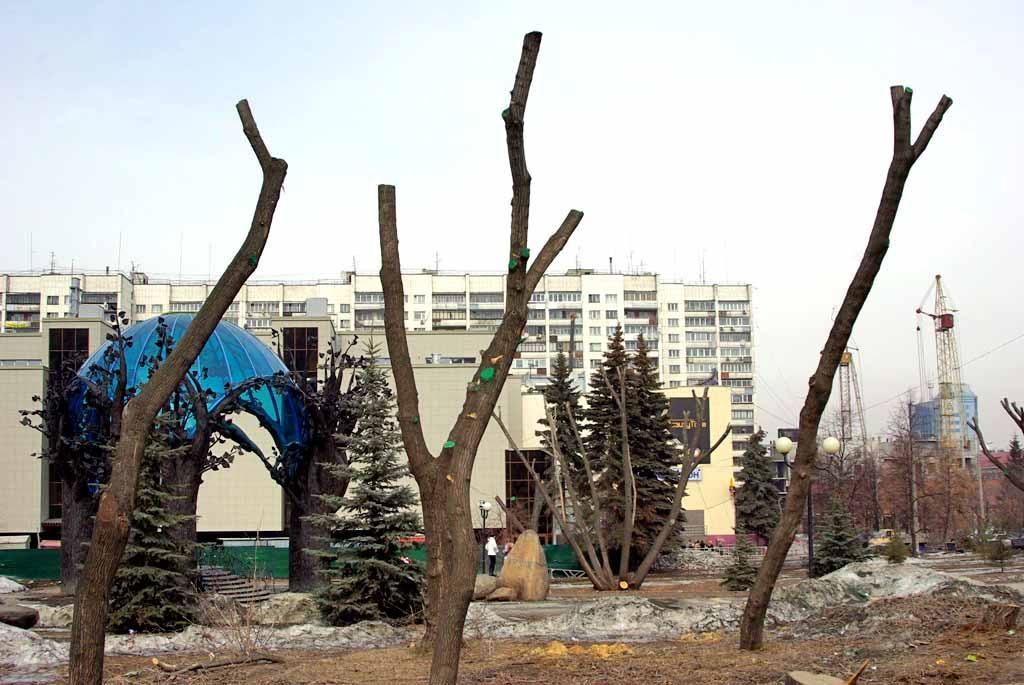 «В Челябинске проводится вырубка и кардинальная обрезка деревьев. Заявляется, что это «омолаживаю