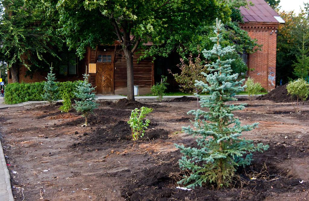 Напомним, что о вырубке деревьев на перекрестке улиц Воровского и Сони Кривой стало известно на п