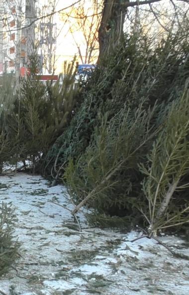 С сегодняшнего дня, 14 января, стартует акция «Елки – не палки!», в ходе которой жители Челябинск