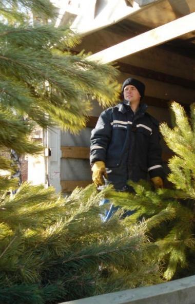 В Челябинскую область ввезли 1300 елок из карантинных фитосанитарных зон Пермского края и Свердло