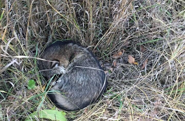 В среду в Металлургическом районе города, 24 октября, зоозащитники приюта для животных «БиМ» нашл