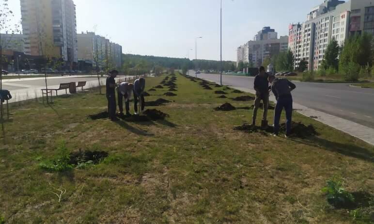 В сквере на Академика Королева Челябинска началась замена неприжившихся деревьев. Подрядная орган