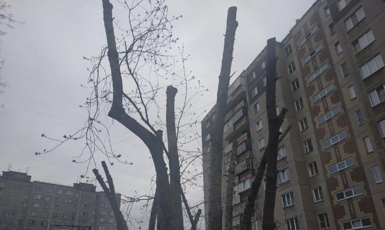 В Челябинске продолжают спиливать ветви деревьев во дворах, оставляя лишь голые, беззащитные, сир