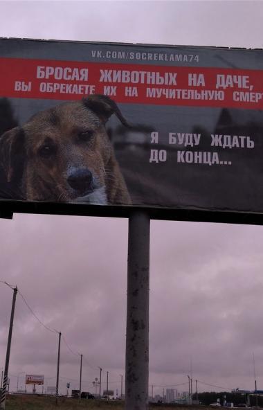 В Челябинске в первые дни осени появилась социальная реклама, призывающая хозяев не бросать своих