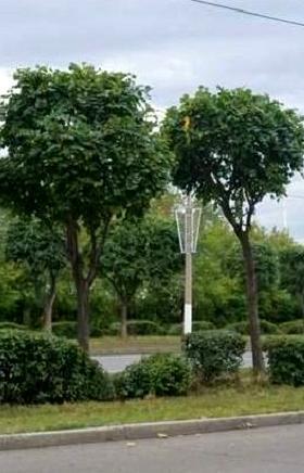 В Магнитогорске начали проводить фигурную обрезку деревьев и кустарников. Спикер городского Собра