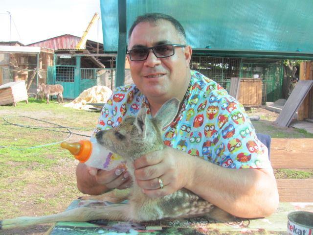 Все больше челябинских зоовладельцев чипируют своих животных. О процедуре чипирования и о том, за