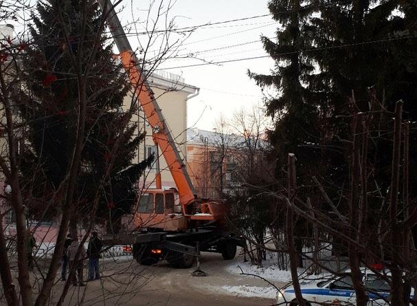 По поручению прокурора Челябинской области организована проверка по факту вырубки многолетней ели