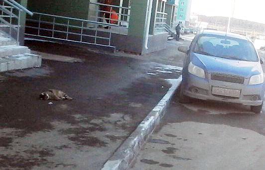 29-летнему жителю Челябинска предъявлено обвинение по статье «Жестокое обращение с