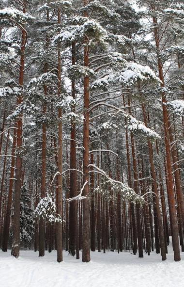 В пятницу, седьмого февраля, в Челябинской области ожидается переменная облачность, снег, на край