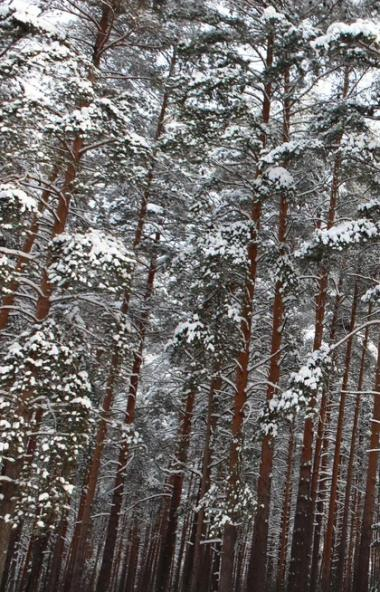 В предстоящие выходные, 29 февраля и первое марта, в Челябинской области ожидаются плюсовые темпе