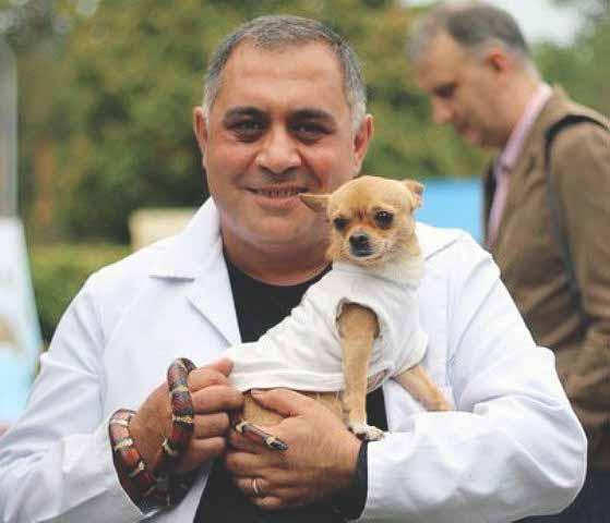 Собака породы чихуа-хуа убежала, пока хозяин был в командировке. Печальная новость