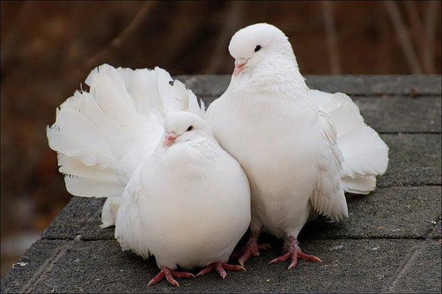 Досмотр партии из четырех голубей был проведен 23 июня. Пернатые прибыли авиарейсом Душанбе-Челяб
