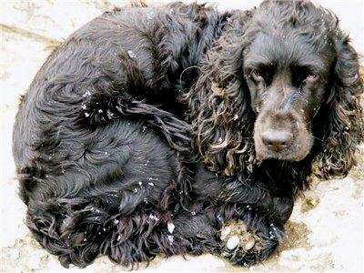 По словам начальника отдела внутреннего ветеринарного надзора управления Россельхознадзора по Чел