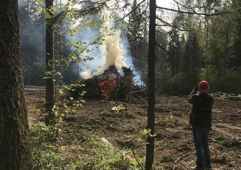 В Челябинской области природоохранная прокуратура проверит законности вырубки леса в Широком Долу