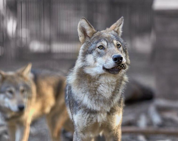 Челябинский зоопарк призывает горожан приходить в гости к животным не с пустыми руками. Желательн