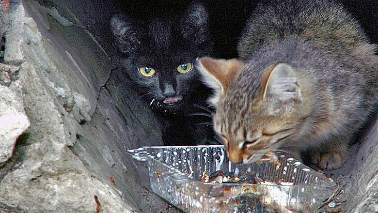 В Челябинске кошка (по мнению социологов, вполне предсказуемо) является сегодня самым распростран