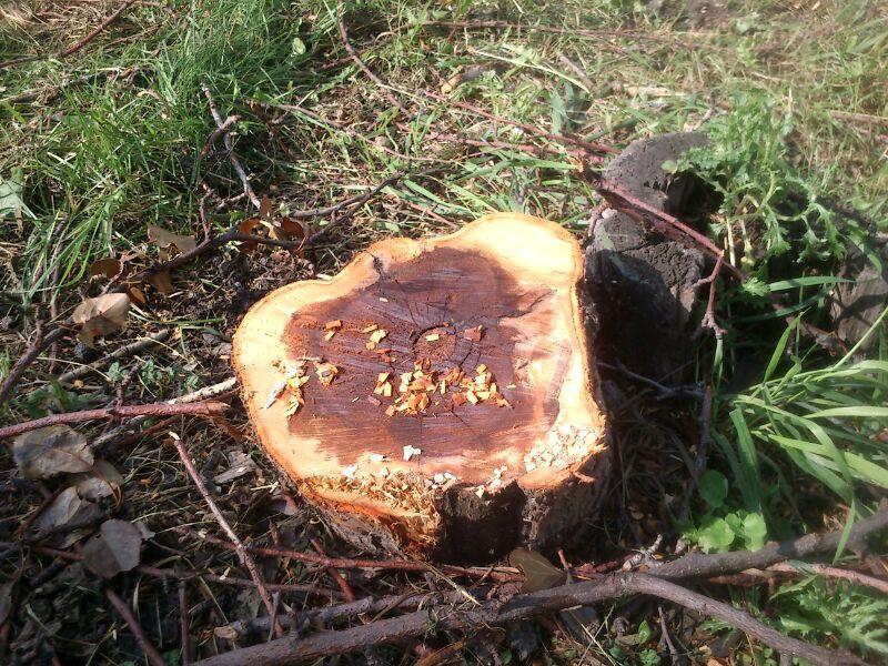 Участок, из-за которого разгорелся сыр-бор, расположен в Краснолесье между улицами Чкалова и Мехр