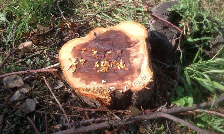 Жителям Челябинской области предложили принять участие в акции по спасению деревьев. Для этого ну