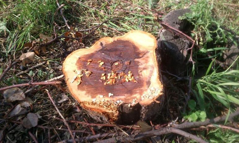 Во вторник, 20 апреля, на Северо-Западе Челябинска приступят к сносу деревьев и кустарников. Это