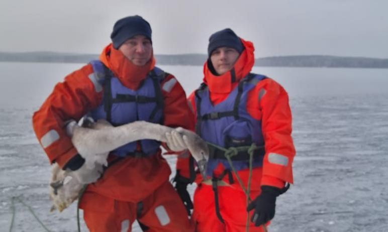 На озере Увильды (Челябинская область) сегодня, 26 ноября, была успешно проведена операция по спа