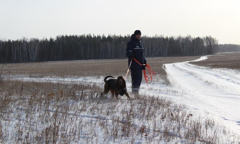 В Златоусте (Челябинская область) третьи сутки продолжаются поиски 80-летнего лыжника. Сегодня по