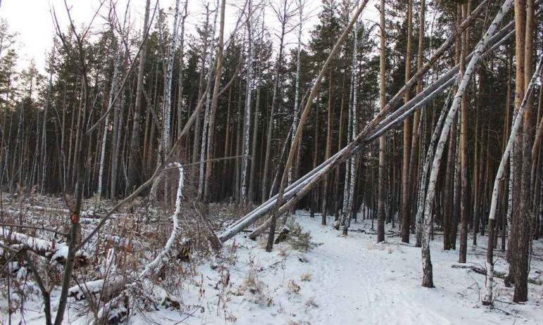 Каштакский и Челябинский боры попадут в комплексную программу сохранения и восстановления. Ее раз