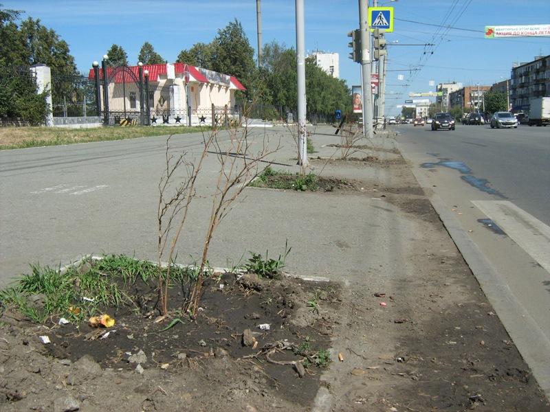 «Деревья высаживаются на деньги муниципалитета. Но их не поливают, саженцы погибают. На кой черт