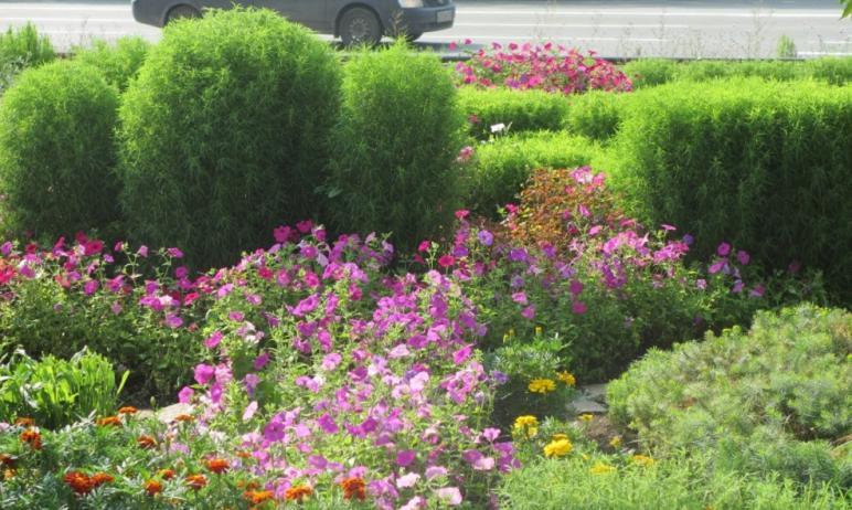 Глава Челябинска Наталья Котова призвала предпринимателей и офисных работников сажать цветы и сея