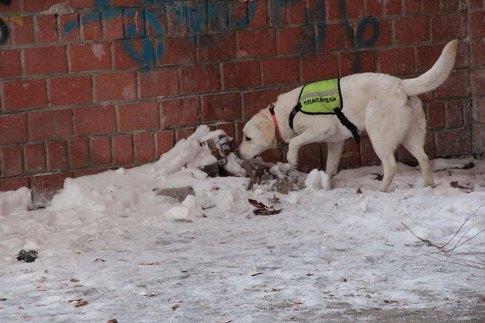 Как сообщили агентству «Урал-пресс-информ» в Поисково-спасательной службе Челябинской области, в