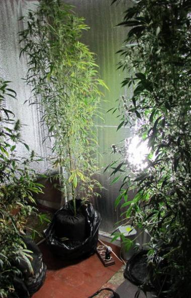 Житель Копейска (Челябинская область) оборудовал дома мини-теплицу для выращивания конопли. При о