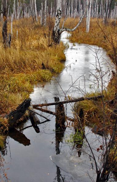 Последний месяц осени в Челябинской области по прогнозам синоптиков обещает быть достаточно холод